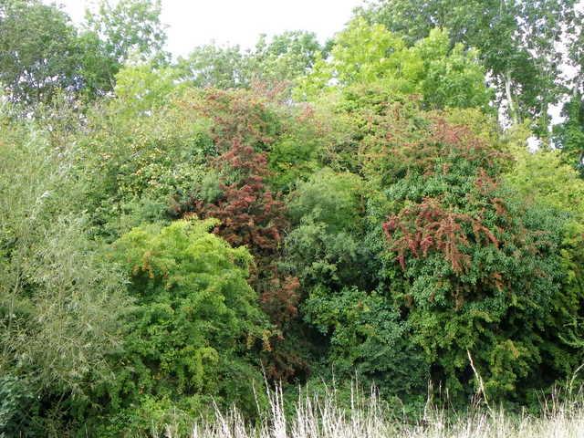 Hawthorn, Flouse Hole