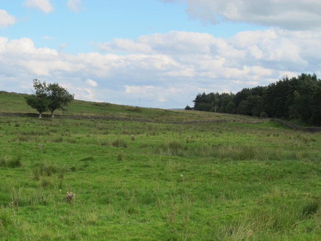 Farmland and plantation west of Hardriggs