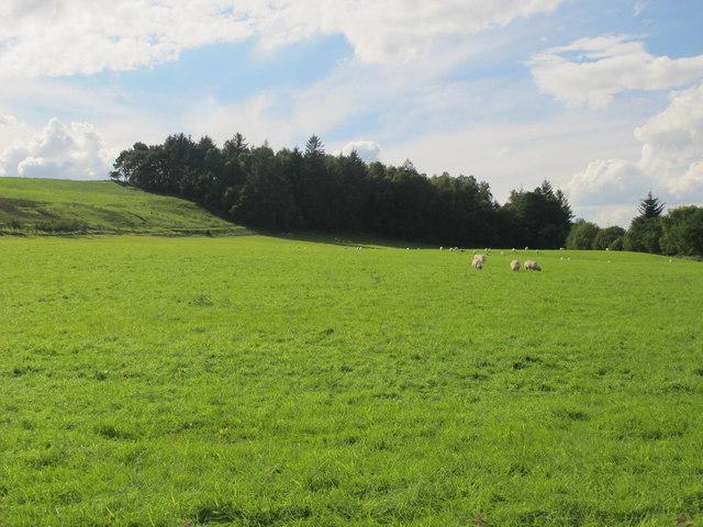 Farmland west of Redpeth