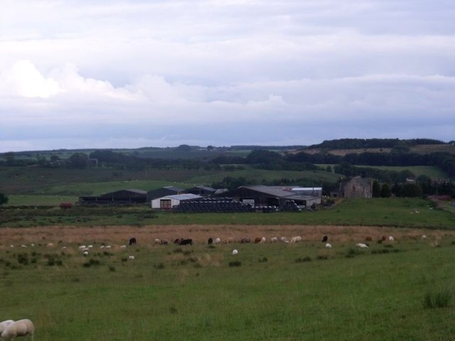 Dyke Farm, animals grazing