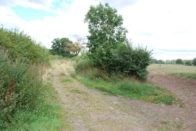 Farm Track Between Fields