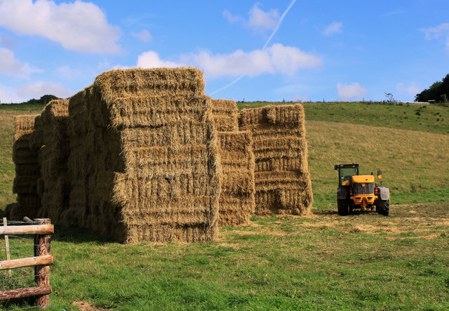 2011 : Guardian of the straw