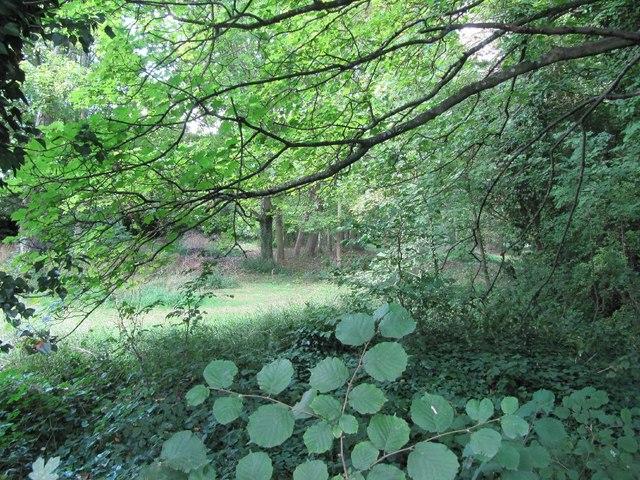 In a meadow near here