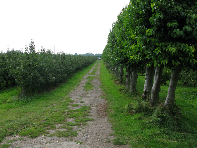 Orchards on Felderland Farm
