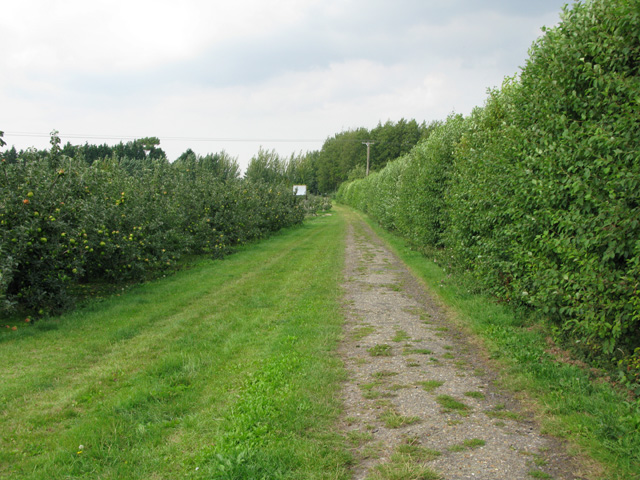 Looking NW along bridleway to Biller's Bush