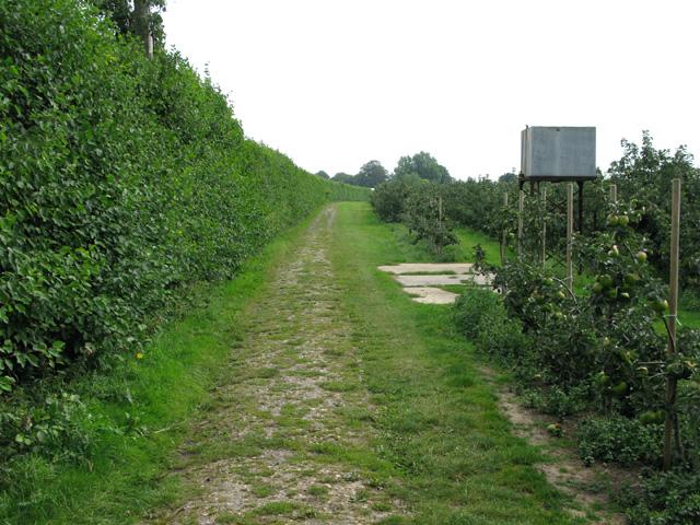 View along bridleway through orchards at Felderland Farm