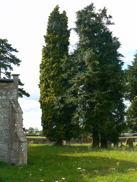 Trees in the north churchyard, St Mary's Church, Childrey