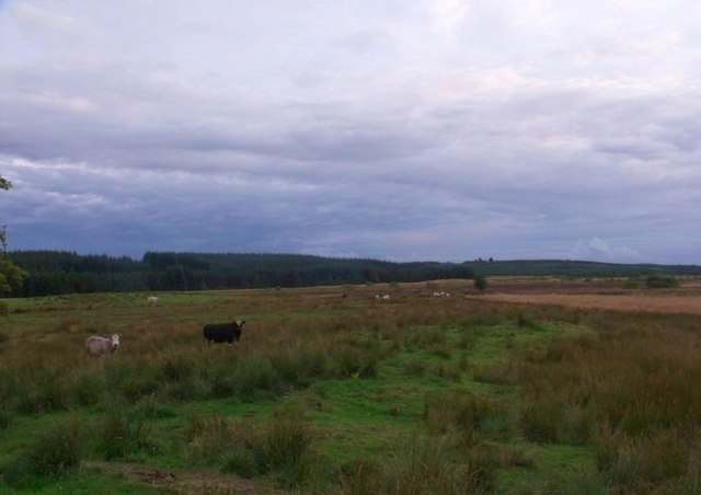 Parkhead Farm, rough grazing