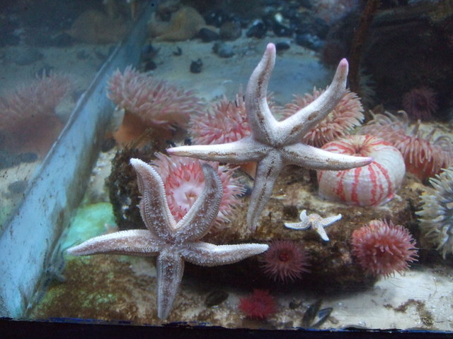 Star fish and anemones