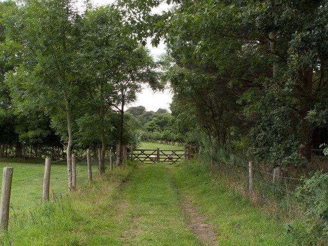 Lane near Quarry Bank Mill