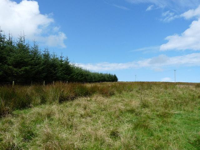 Balker Wood