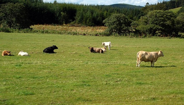 Grazing Land by the River Isla