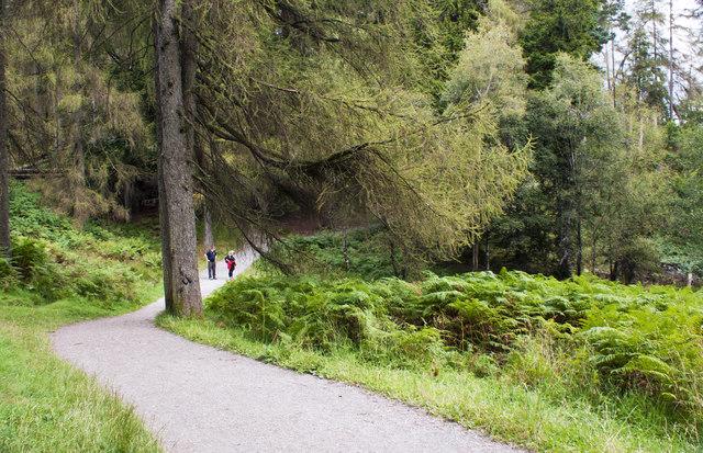 The path through Tom Heights Intake Plantation