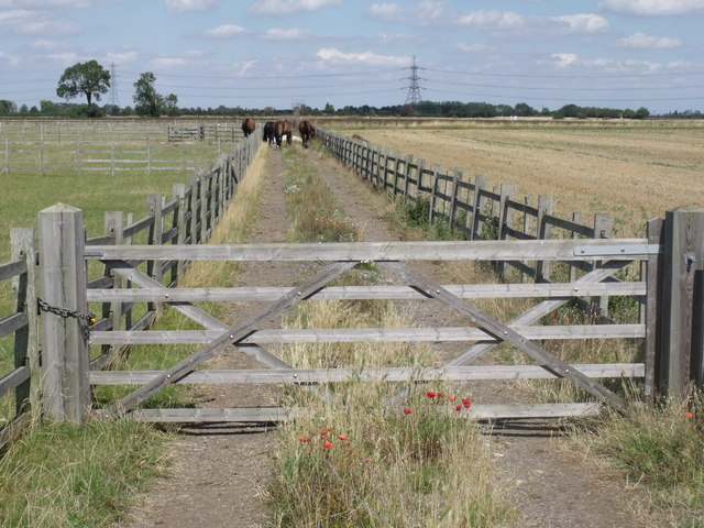 Gated track with Horses