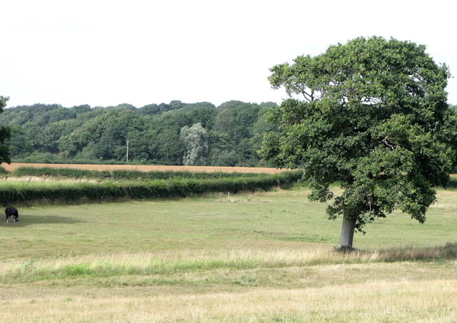 Pasture off Green Lane near Broyle Side, East Sussex