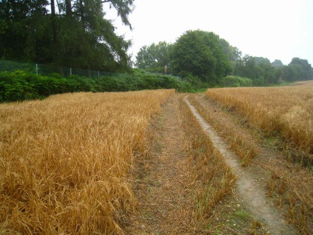 Path through the field