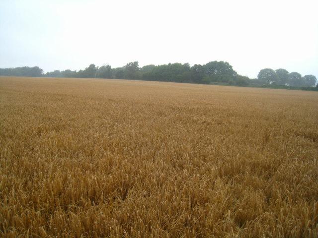 Field by St John's Copse