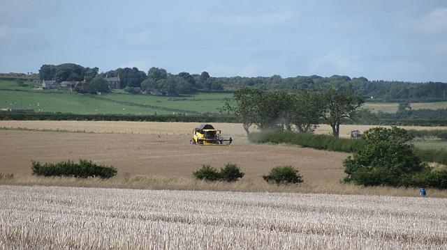Harvest, Lesbury
