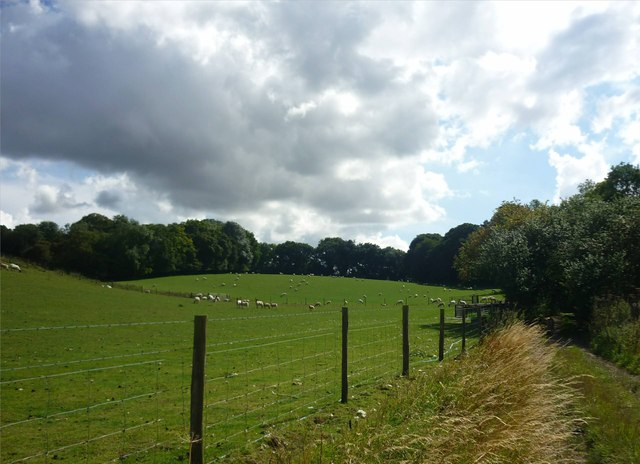 Sheep pastures beside Dark Lane