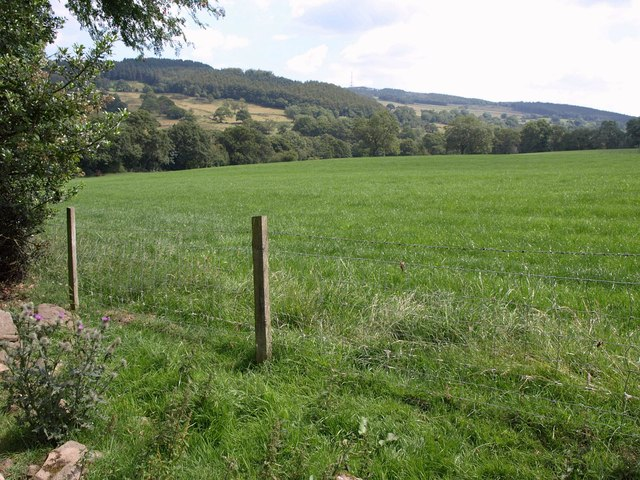 Field beside Ellers Wood