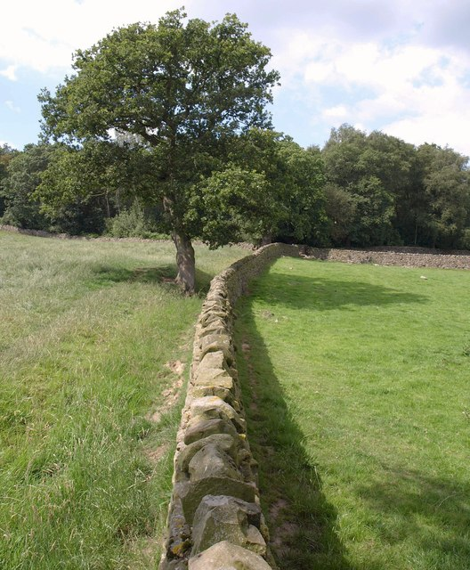 Wall and tree by Dobpark Wood