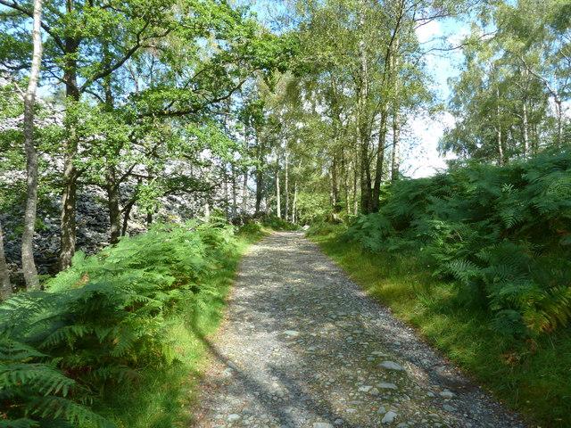 Footpath near Moss Rigg Wood