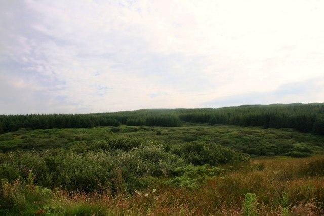 Moor and Woodland