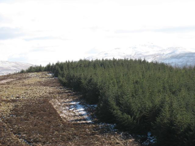 Forest south of Carnedd Iago
