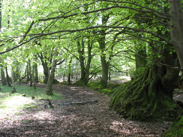 In Brockwell Wood