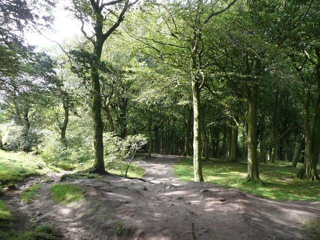Path in Wilson's Wood, Otley