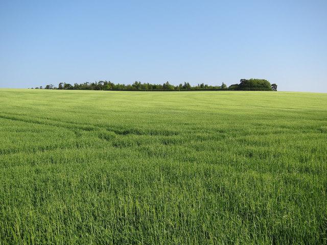 Gravelpit Plantation