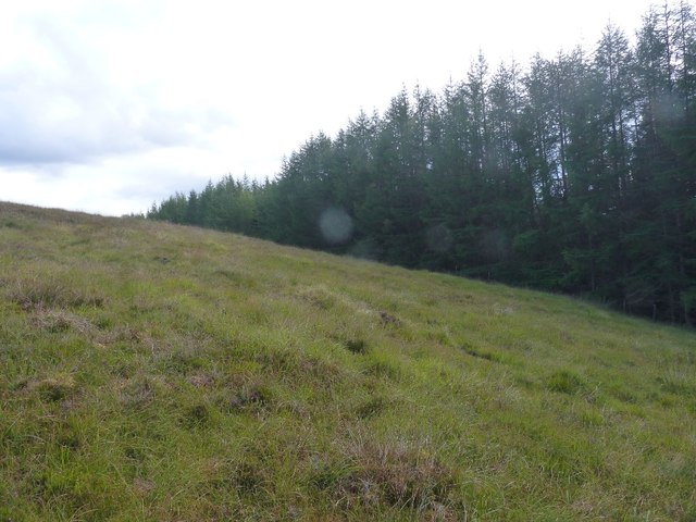 View across grazing land to forestry edge