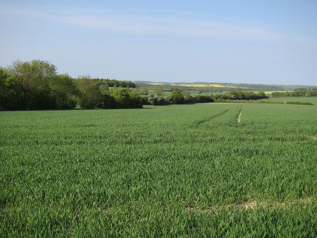 Farmland near Cardinal's Green