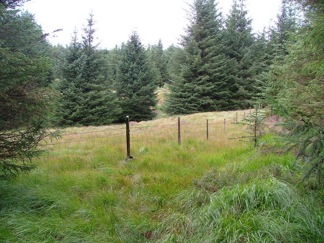 Small clearing and fence in forestry
