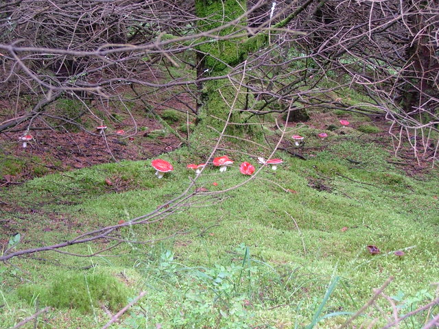 Vivid red fungi