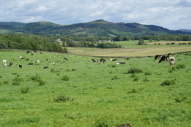 Dairy production at Throstle Nest Farm