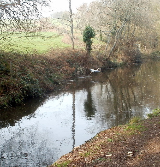 Heron takes off from canal near Pontypool