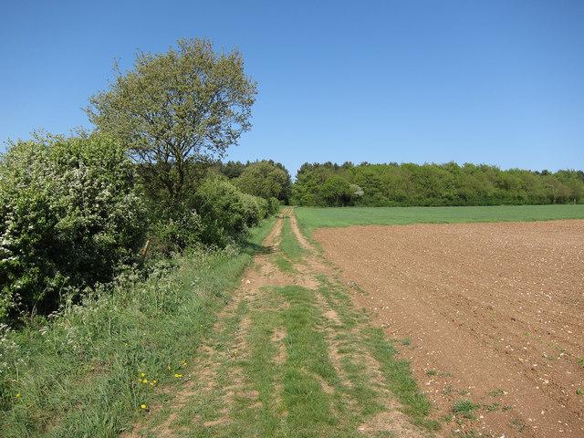 Track to Borley Wood