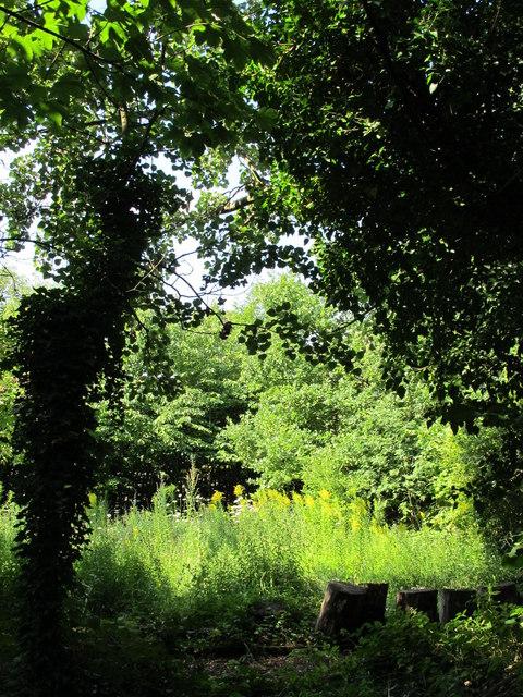 Jenny Wood Nature Reserve, Westbere Copse