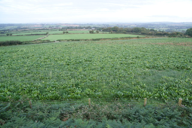A crop below Crugiau Cemmaes