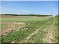 TL5848 : Harcamlow Way along the Roman Road by Hugh Venables
