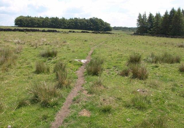 Weston Moor