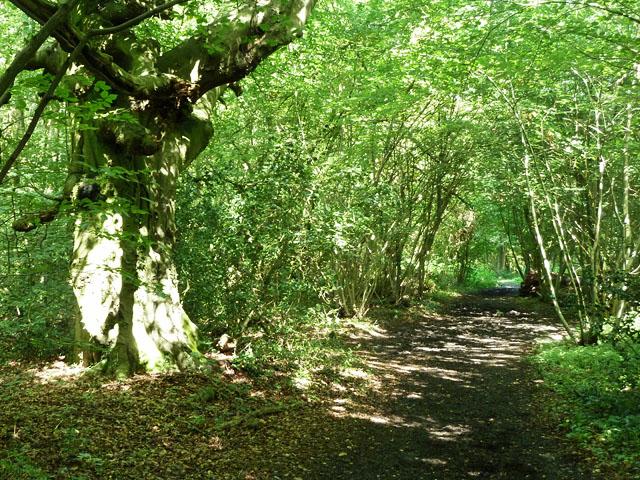Bridleway along the Kent boundary