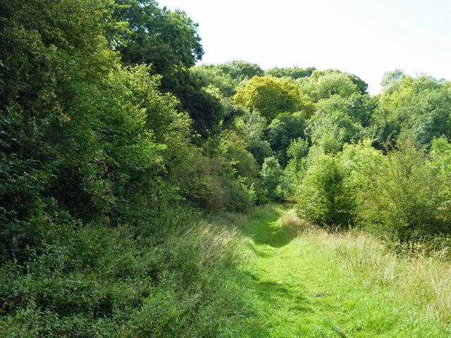 Path towards Blackbush Shaw