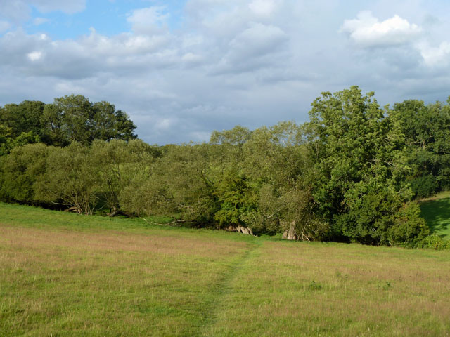 Willows near Obriss Farm