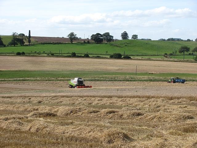 Harvest near Lesbury