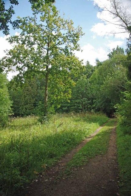 Glade in Broaks Wood