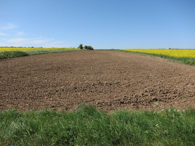 Bare earth field