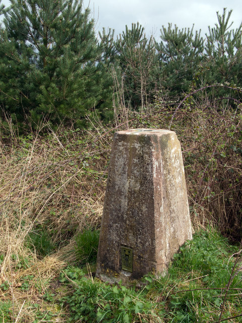 Trig point of Long Marston in shelter belt
