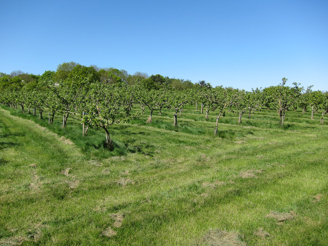 Orchard at Little Bowsers
